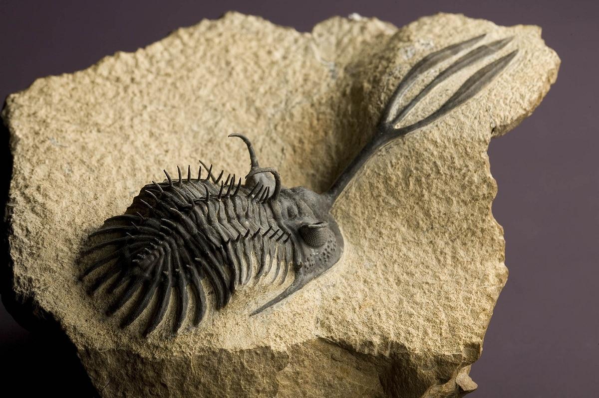 fosiles del paleozoico