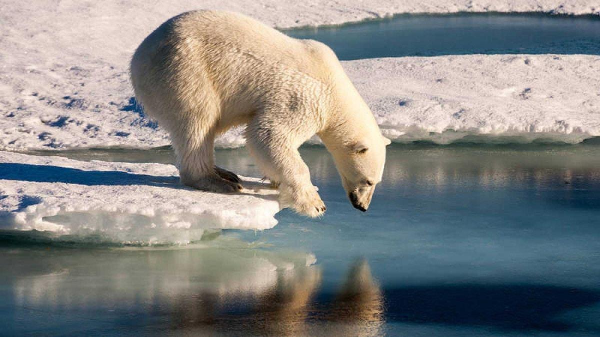 oceano glacial artico