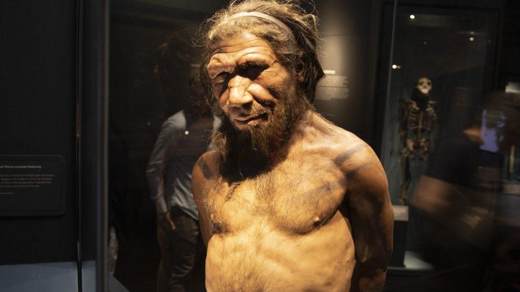 homo neanderthalensis